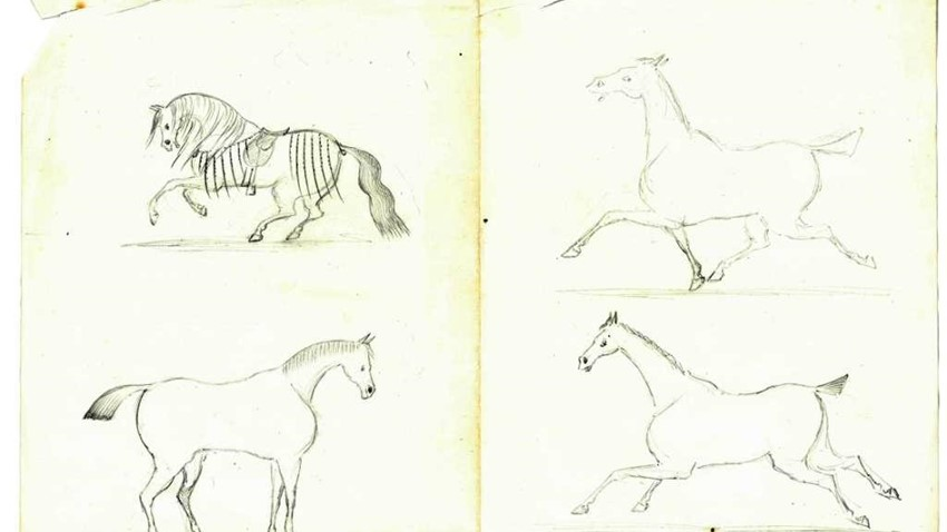 Image of sketch of a horse
