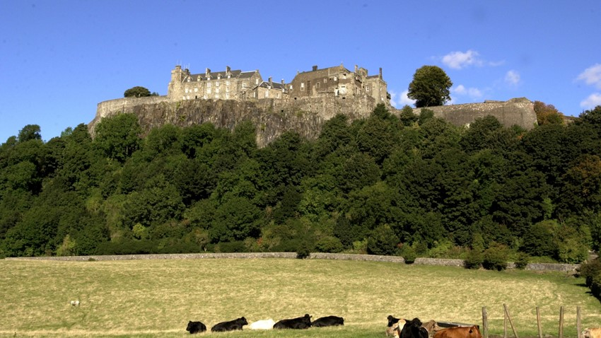 Image of Cows in Field in Front of Stirling Castle